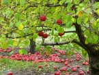 The Apples America Never Ate - The True Story Of Johnny Appleseed